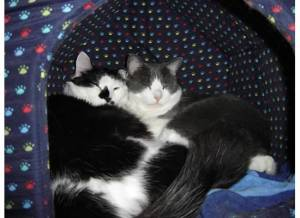 These unrelated male cats were best buds from day 1.